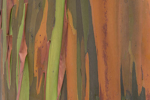 Ingo Arndt - Peeling Eucalyptus Tree Bark