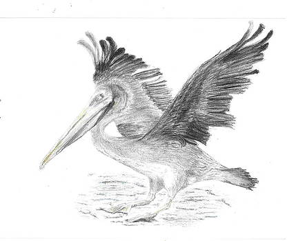 Pelican 2 by Sal Lomick