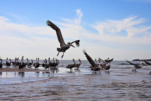 Pelican convention by Dina Calvarese