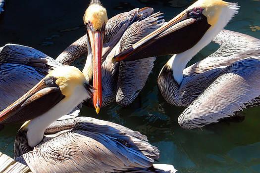 Carmen Del Valle - Pelican Eating Frenzie