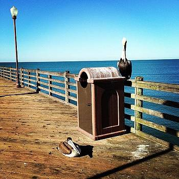 Pelican Hanging Out. #pier #rita520 by Rita Spiegel