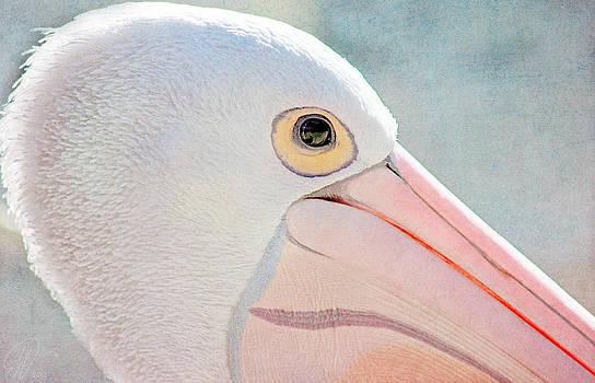 Pelican by Margaret Hormann Bfa