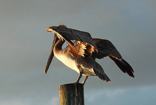 Pelican on Post 3 by Roger Soule