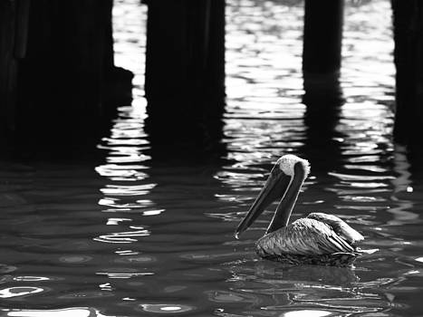 Pelican Resting in a Cove by Jeremy Allen
