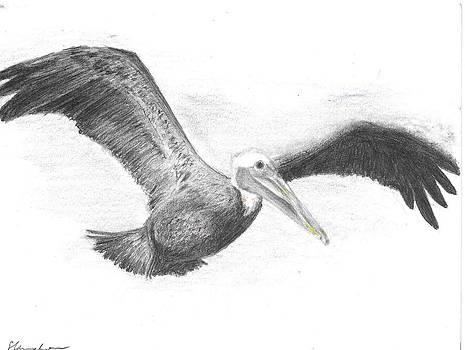 Pelican by Sal Lomick