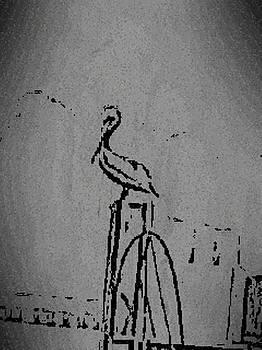 Pelican by Shawn Elston