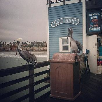 Pelicans Hanging At 0'side Pier by Rita Spiegel
