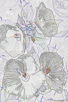 Michelle Cruz - Penciled Hibiscus Plant