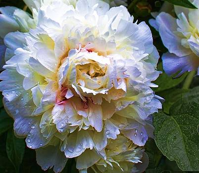 Peony Beauty by Christiane Kingsley