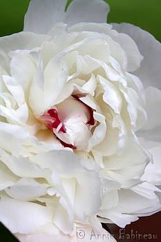 Annie Babineau - peony bloom