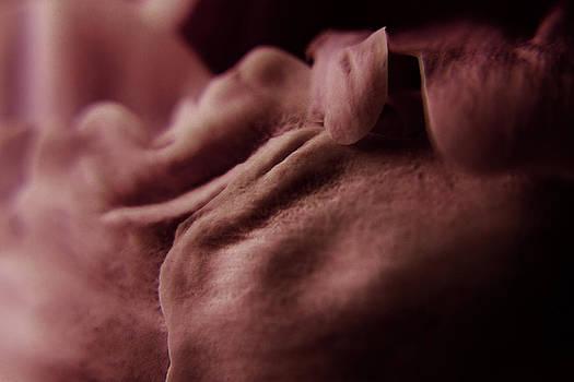 Scott Hovind - Peony Petals 2