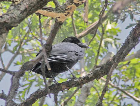 Perching Crow by Garnie McEwen