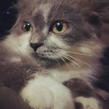 Persian kitten by Nawarat Namphon