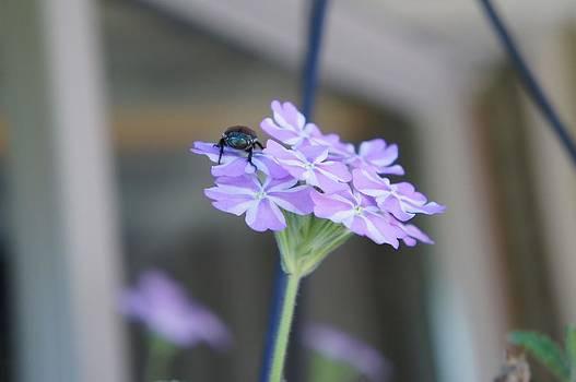 Pests by Kristine Bogdanovich