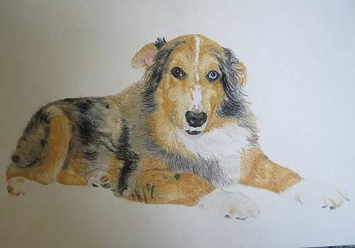 Pet Portrait Border Collie Puppy Watercolor Memorail 18 x 24 inch by Pigatopia by Shannon Ivins