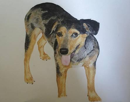Pet Portrait Brindle Puppy Watercolor Memorail 18 x 24 inch by Pigatopia by Shannon Ivins