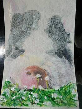 Pet Portrait Original Pig n Meadow Watercolor 4 x 6 inch U Provide The Picture or Idea Made to order by Shannon Ivins