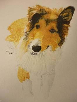 Pet Portrait Sheltie Puppy Watercolor Memorail 9 x 12 inch by Pigatopia by Shannon Ivins