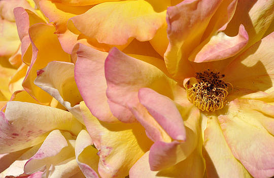 Petal Profusion by Sandy Fisher