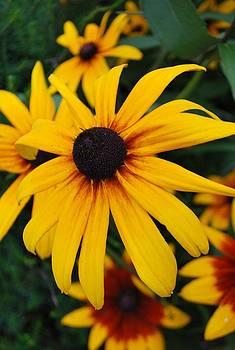 Michelle Cruz - Petals of Yellow