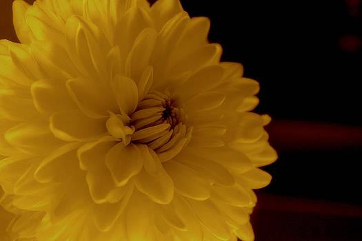 Petals by Shweta Singh