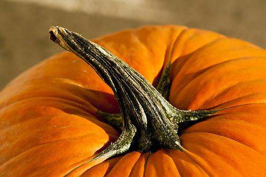 Peter Longhorn Pumpkin by Fredrik Ryden