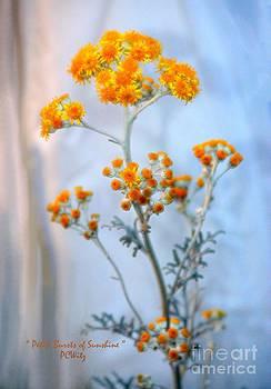 Patrick Witz - Petite Bursts of Sunshine
