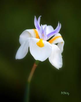 Patrick Witz - Petite Flower