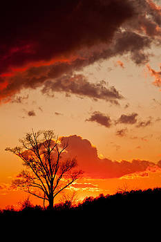 Petrolia Sunset 2 by Barbara Barcroft