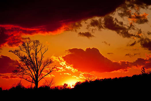 Petrolia Sunset by Barbara Barcroft