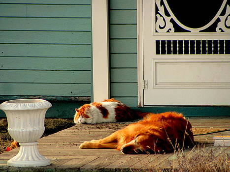 Pets on the front porch by Amy Bradley