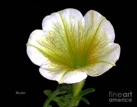 Dale   Ford - Petunia 2