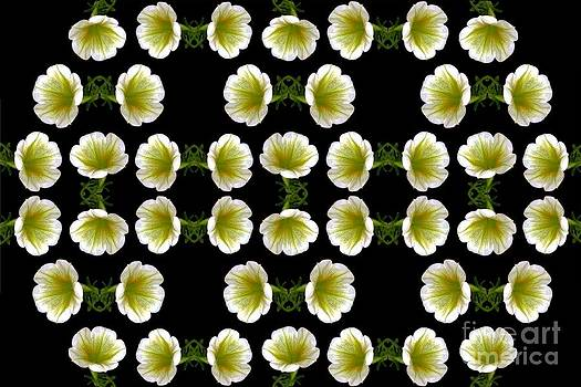 Dale   Ford - Petunias