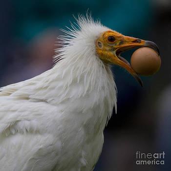 Heiko Koehrer-Wagner - Pharaos Chicken