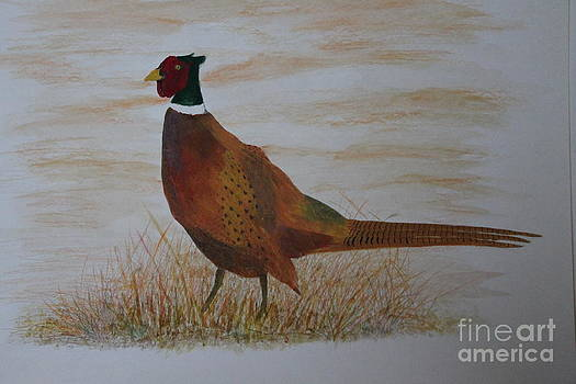 Pheasent watercolor by Ralph Hecht