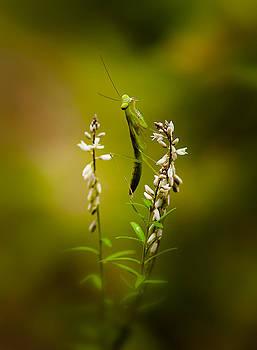 Photography by Beni Arisandi