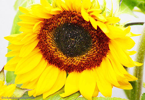 Picasso Sunflower Reanimated by Enrique Rueda