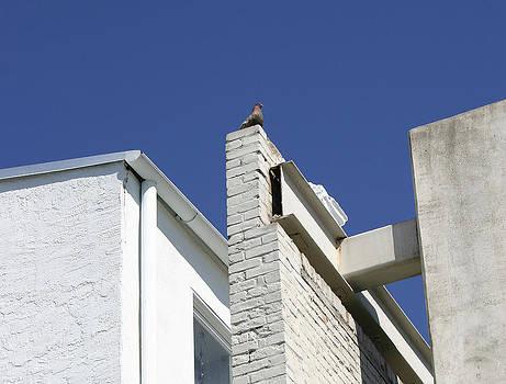 Nina Fosdick - Pigeon