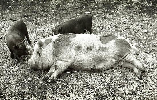 Piggies by Virginia Furness