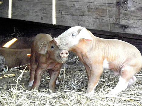 Piglet Love by Kim Galluzzo Wozniak