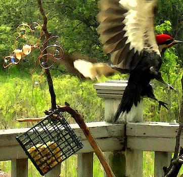 Amalia Jonas - Pileated Woodpecker