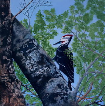 Pileated Woodpecker by Brenda Everett