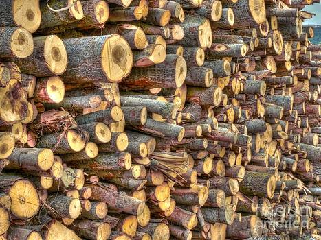 Piled Wood by Alfredo Rodriguez