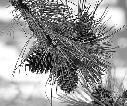 Pine Cones by Dorrene BrownButterfield