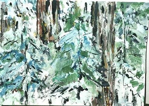 Pine forest detail by Ilona Pincse