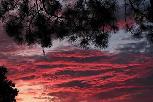 Peg Urban - Pine in Pink