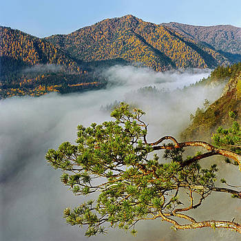 Pine tree branch and fog  by Pavel  Filatov
