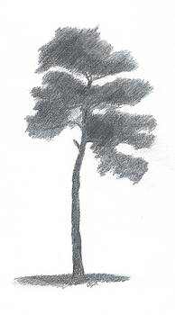 Pine Tree Drawing Number Two by Alan Daysh