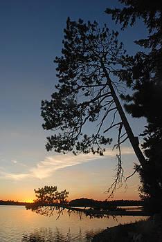 Robert Anschutz - Pine Trees at Sunset