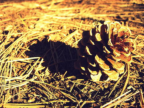 Pinecone by Heather TenBrink